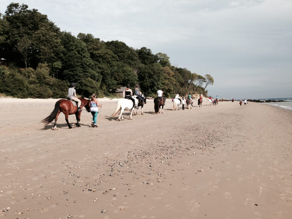 Priory Bay Horse Riding